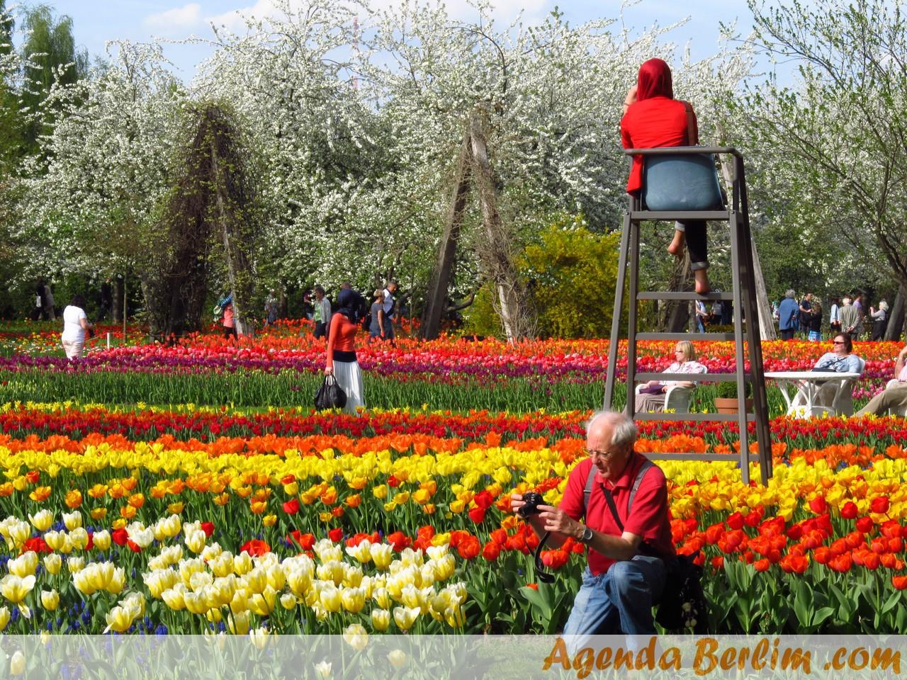 Festival de tulipas no Britzer Garten - ©Pacelli Luckwu