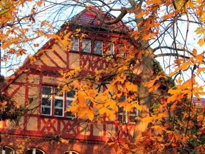 As cores do outono em fotos