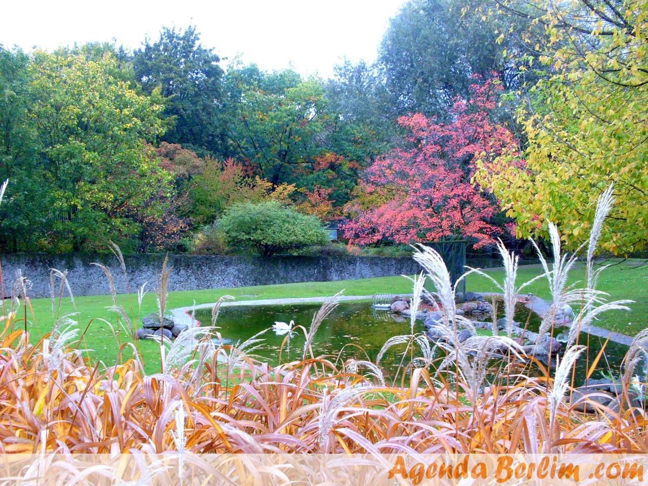 Outono chegado no Zoo de Berlim