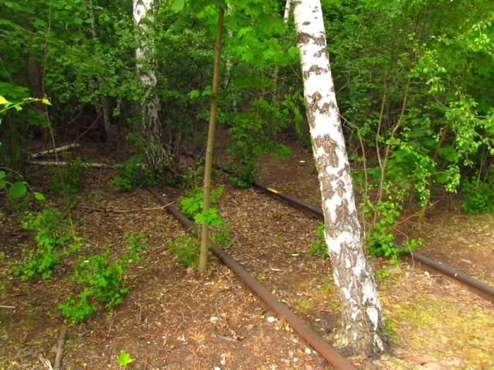 Restos dos trilhos sendo tomados pela natureza